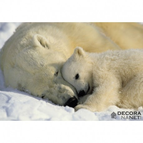 Fotomural NATIONAL GEOGRAPHIC 1-605 Polar Bears