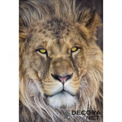 Fotomural NATIONAL GEOGRAPHIC 1-619 Lion