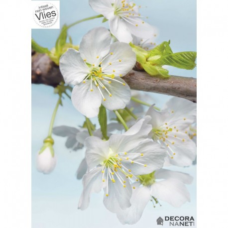Fotomural FLORAL AND WELLNESS XXL2-033 Blossom