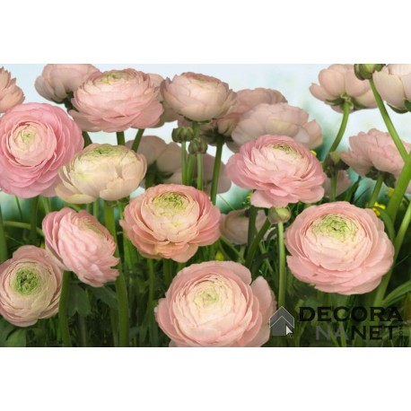 Mural FLORAL AND WELLNESS 8-894 Gentle Rose