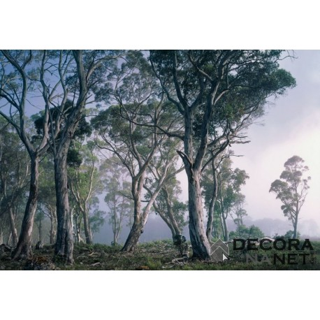 Fotomural NATIONAL GEOGRAPHIC 8-523 Fantasy Forest